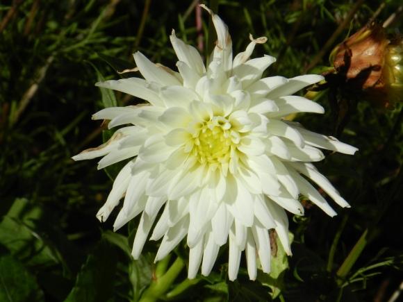 Oxford Flower 1